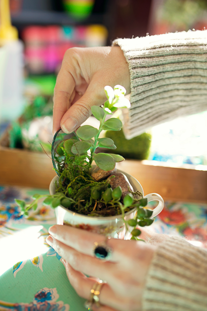 building a succulent plant
