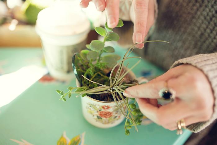 building my vintage teacup succulent