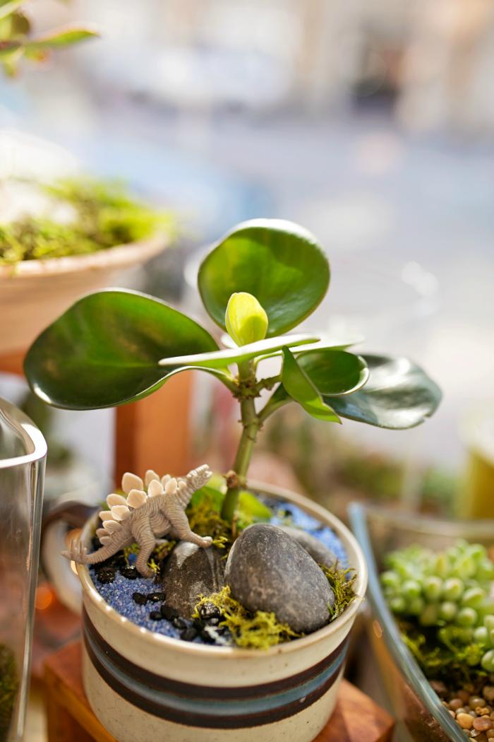 ephemera succulents